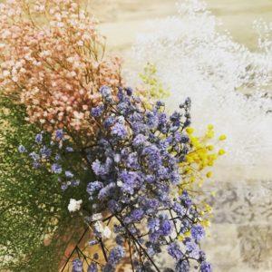 かすみ草5色の集合写真